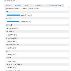 2019年夏至の日!げっ歯目総選挙開催中(最終日)~デグー僅差で1位~