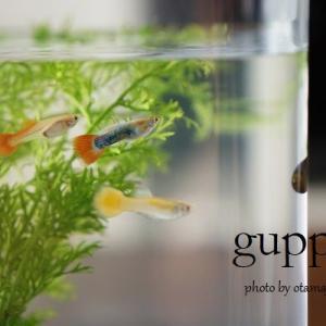 ☆我が家にかわいい魚たちがやってきました。
