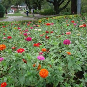 四季折々936 10月の水の苑地