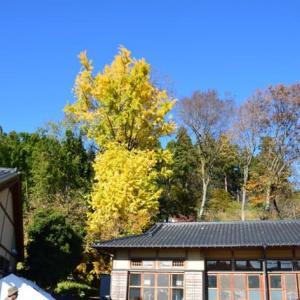 四季折々942  晩秋の津久井湖城山公園