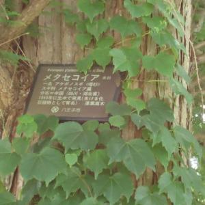 四季折々924  片倉城跡公園の初夏