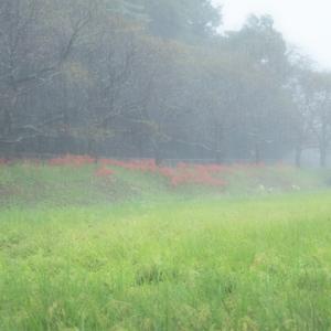 雨に煙る、土砂降りの見沼東縁をプロ仕様のオリンパスで