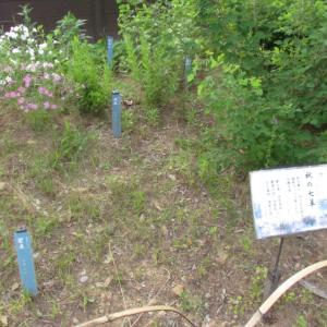 浜松・万葉の森公園から ~5~ 井伊家の家紋と天皇陛下のお印