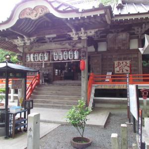 浜松・万葉の森公園から ~11~ お寺の本堂とねこちゃん