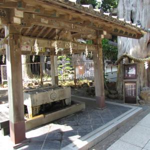 伊豆白浜神社から ~2~ ご神木の威厳