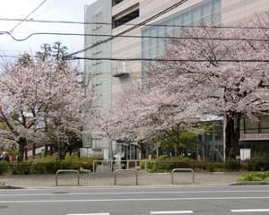 お花見レンタルスペースご利用受付中!