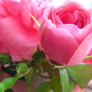 5月10日金曜日の午後から〜薔薇ブーケを販売しますー!