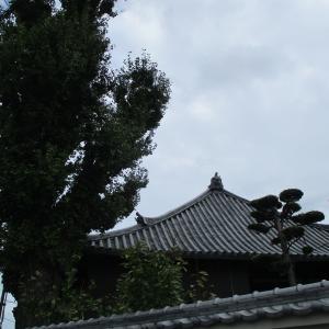 今朝のお散歩は吉原の西光寺さんまで