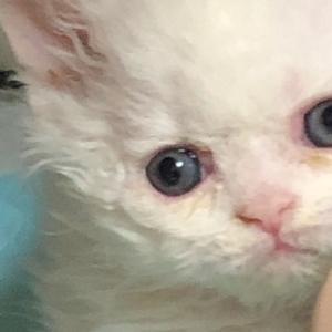 2月生まれの子猫たち