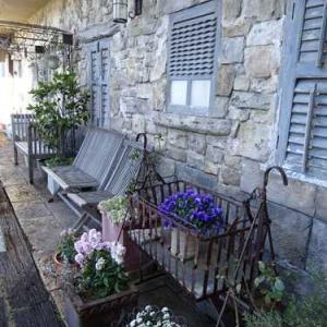 鎌倉スワニー*2月のムラサキが綺麗な花の庭*ガーデン