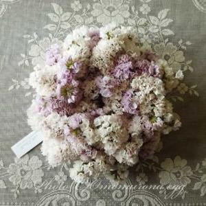 【Kanon 花とみどりと】*可憐なスターチスのドライリース*雛祭