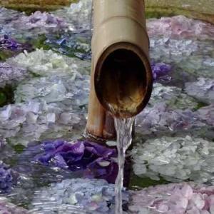淡い紫のあじさい浮かぶ花手水*鶴岡八幡宮*雨の日の紫陽花