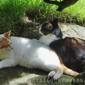 猫が振り向くためには*見返りと要求
