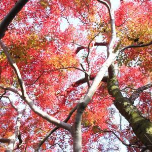 紅葉を見ながら散歩♪