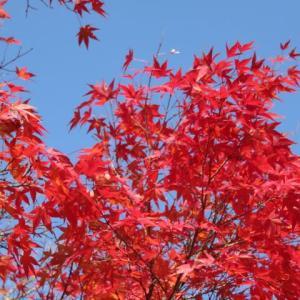 秋だな~。