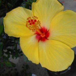 これも夏のお花!