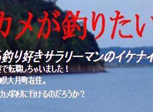 9月後半の下ノ加江川産のヒラスズキの皮付きの造り