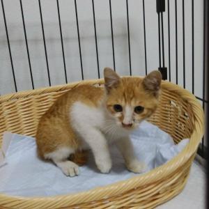 子猫ちゃん&イクリ収穫