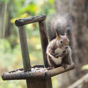 エゾリスと茸にシクラメン・・台風一過で冷え込み秋が深まります。