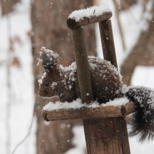 今度は大雪かな?雪に埋もれてしまうよ・・エゾリス君!