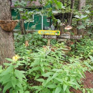 秋の花が咲き、キノコも出て・・カンタベリーの庭は秋の気配!