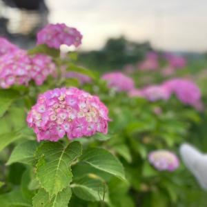 季節の花★