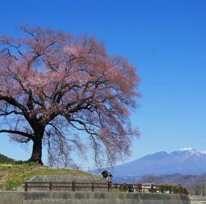山梨県内の桜の名所巡りツーリング2020(中編)