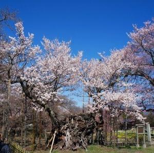 山梨県内の桜の名所巡りツーリング2020(後編)