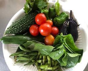 11種類の野菜の収穫とかごバスケット