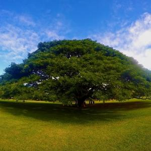 永眠と この木なんの木 気になる木 ~小林亜星さん永眠とまちのでんきや~
