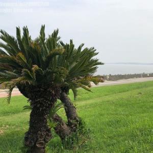 椰子の木がある風景