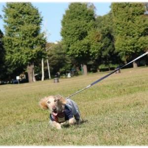 定番コースの公園でお散歩タイム♪