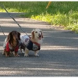 いつものお散歩コースで♪