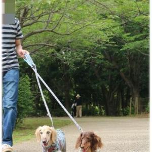 久しぶりに柏の葉公園でお散歩♪