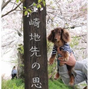 キレイな桜のトンネルを満喫☆