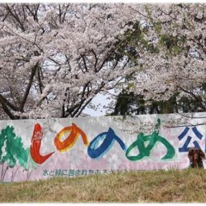 桜並木がキレイな公園でお花見さんぽ♪