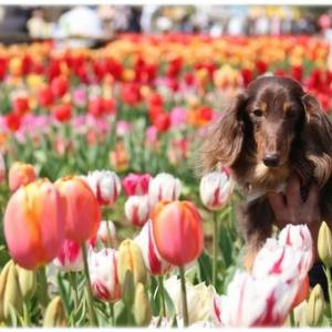 カラフルなチューリップで春を満喫☆