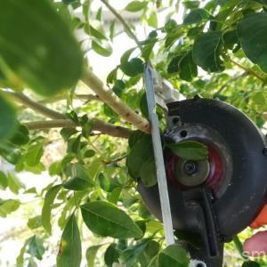 大きくなったシンボルツリーを剪定しよう!夏になったらわっしゃわしゃ。苦労のポイント。
