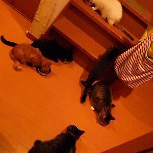 10月5日 ネコたち