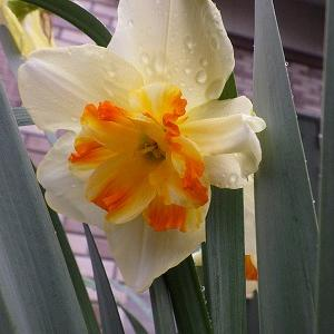 3月27日 花とミーア