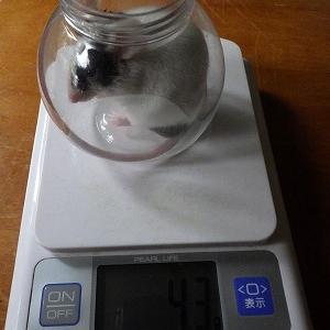 4月20日 ロジクールの体重測定