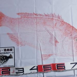 ★大型真鯛の修正修復リフォーム魚拓♪