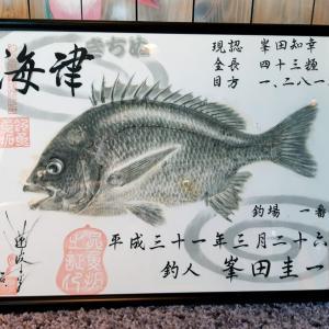 ★浜名湖海津(キビレ)魚拓♪