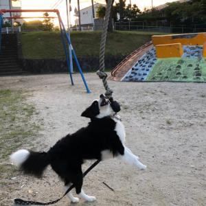 あの犬怖!!