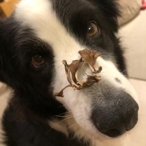 犬にも効果ある?