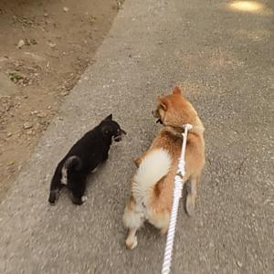 お母さんと一緒にお散歩(^^♪