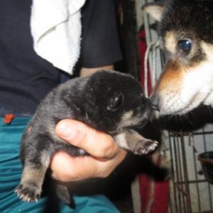 元気な黒ちゃん誕生しました。