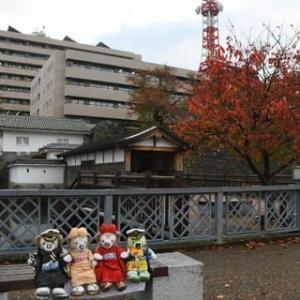 2020.11.11 福井から帰って来ました