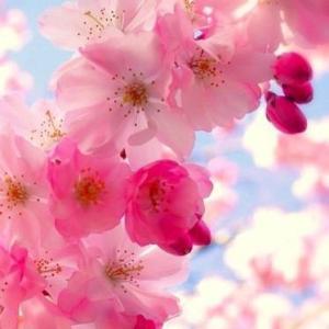春の陽気と女心と・・・♡