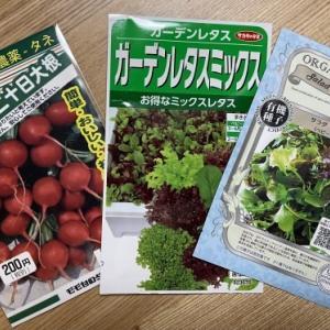野菜作りのまねごと